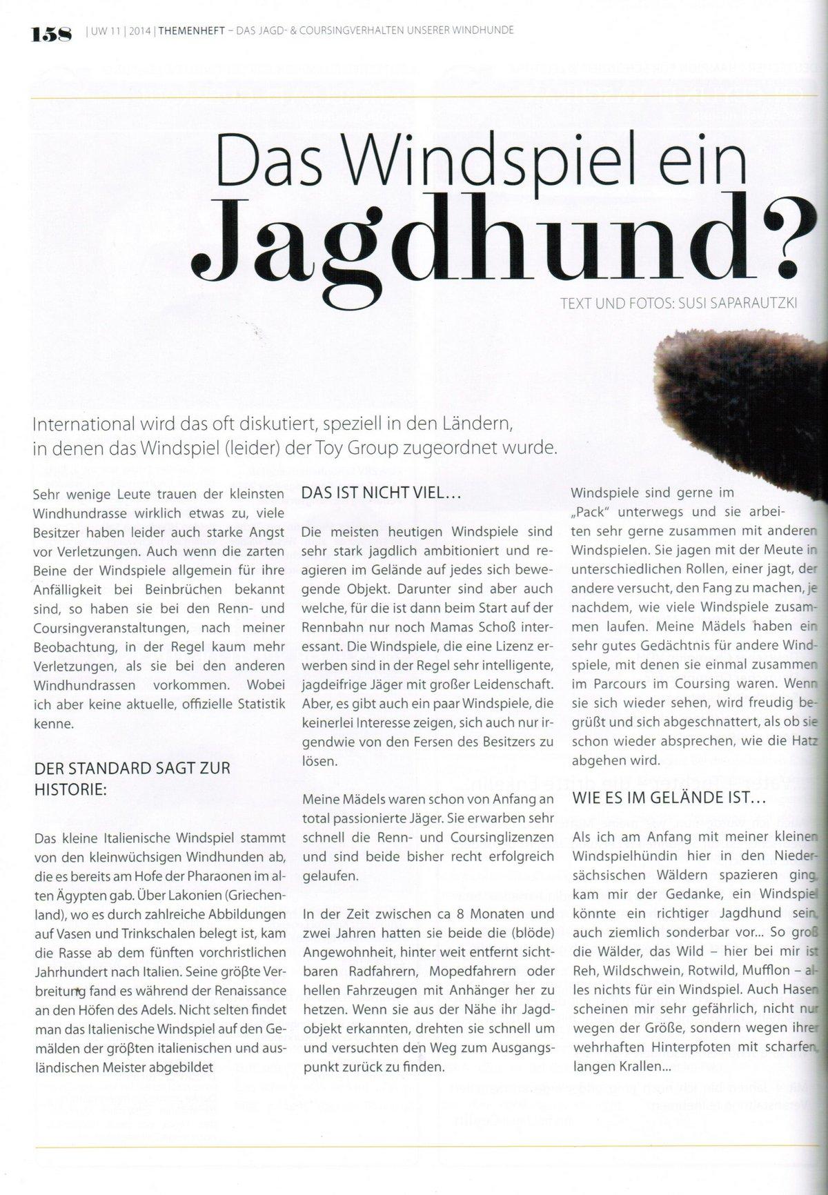 das-windspiel-ein-jagdhund-1